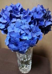 紫陽花に癒される