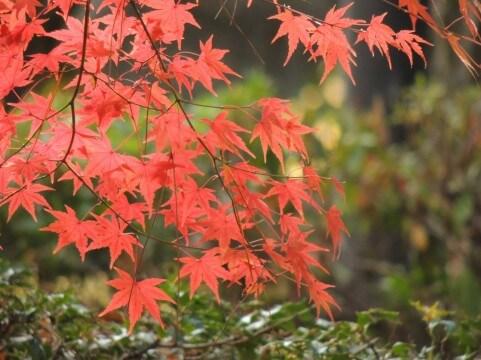 深まる秋、年内残りの時間を感じつつ・・・