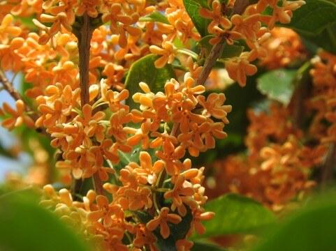秋は口腔の健康を見直す良い季節!